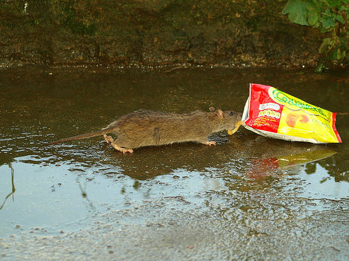 Disgusting Story Of Man Who Accidentally Shared His Crisps With A Rat 4105767543 aef2e53cd4 1