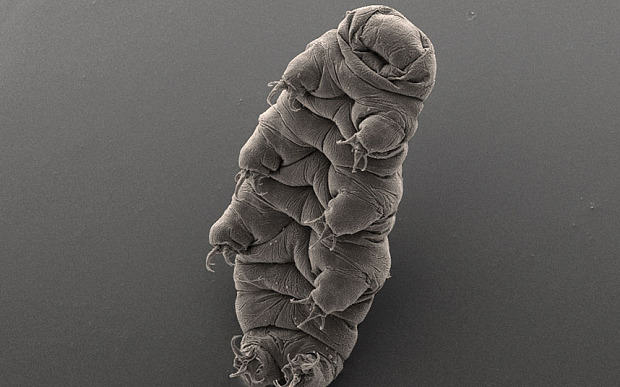 Animal Brought Back To Life After Being Frozen For 30 Years Tardigrade 3550854b 2