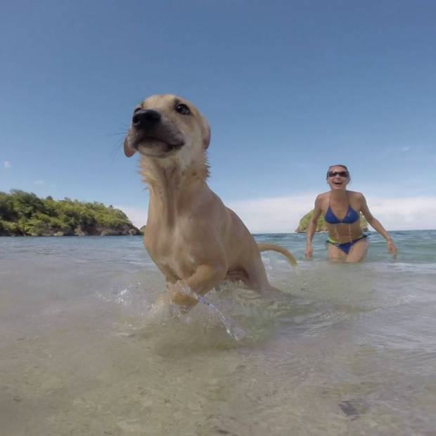 Woman Falls In Love With Stray Dog On Holiday, Brings Him Back Home ad 193234571 2
