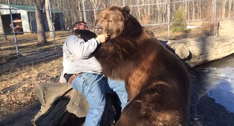 Russian Man Relaxes With Best Friend, Also His Friend Is A Bear bearfacebook