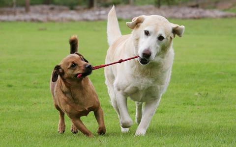 New Decision By FBI Is Good News For How Animal Cruelty Is Dealt With dog2 a28699fee684f5bfbcec9d00410e8255