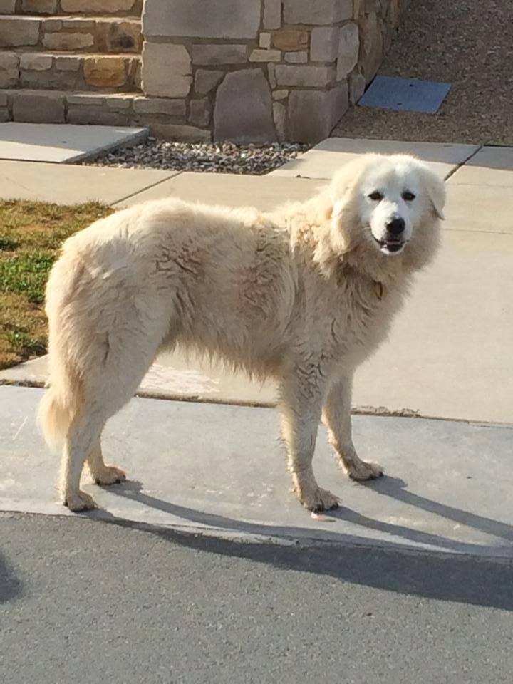 Mysterious Ghost Dog Wanders Round Town Hitchhiking Lifts franklin 2