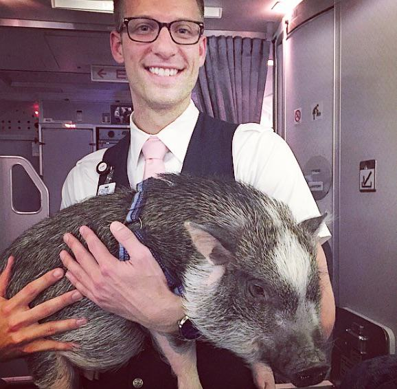 This Emotional Support Pig Helps His Owner Get Over Her Fear Of Flying hamlet1