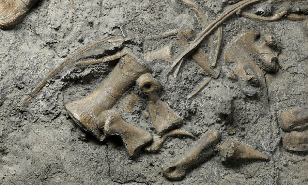 New Discovery Proves Dragons Actually Did Live In Wales hand dinosaur