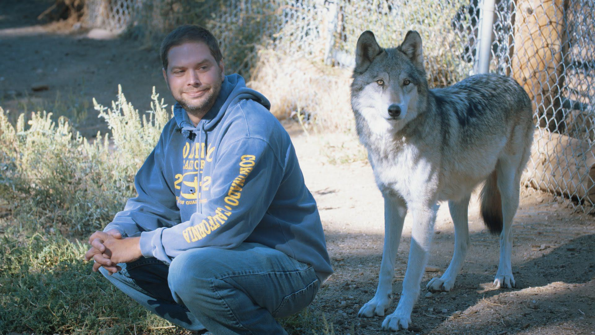 These Wolves Are Helping Veterans With Post Traumatic Stress Disorder Recover maxresdefault
