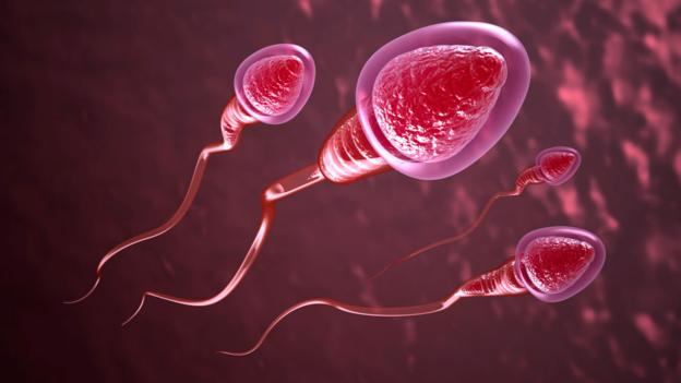 New Contraceptive Method Allows Men To Turn Sperm On And Off p01dn75d