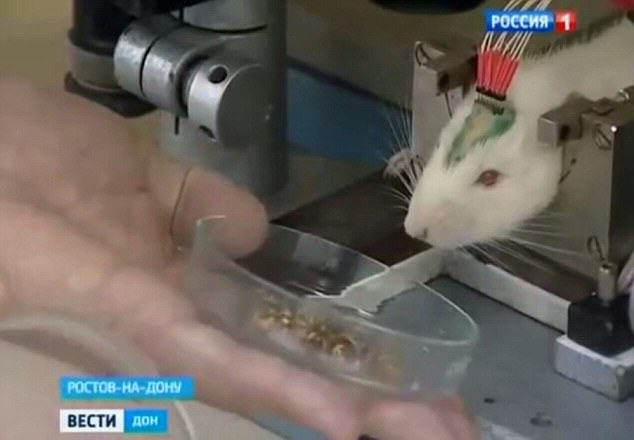 Vladimir Putins New Secret Weapon Against ISIS Is Absolutely Insane rats3