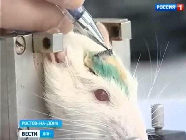 Vladimir Putins New Secret Weapon Against ISIS Is Absolutely Insane rats4