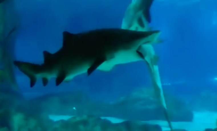 This Shark Won Its Aquarium Turf War In The Most Brutal Way shark3