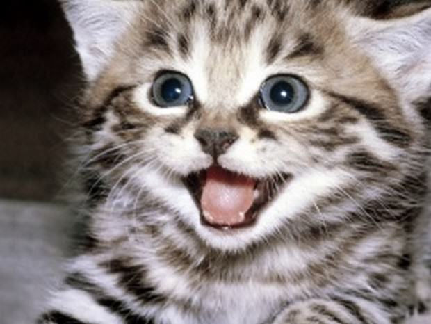 New Decision By FBI Is Good News For How Animal Cruelty Is Dealt With smiling cats 1