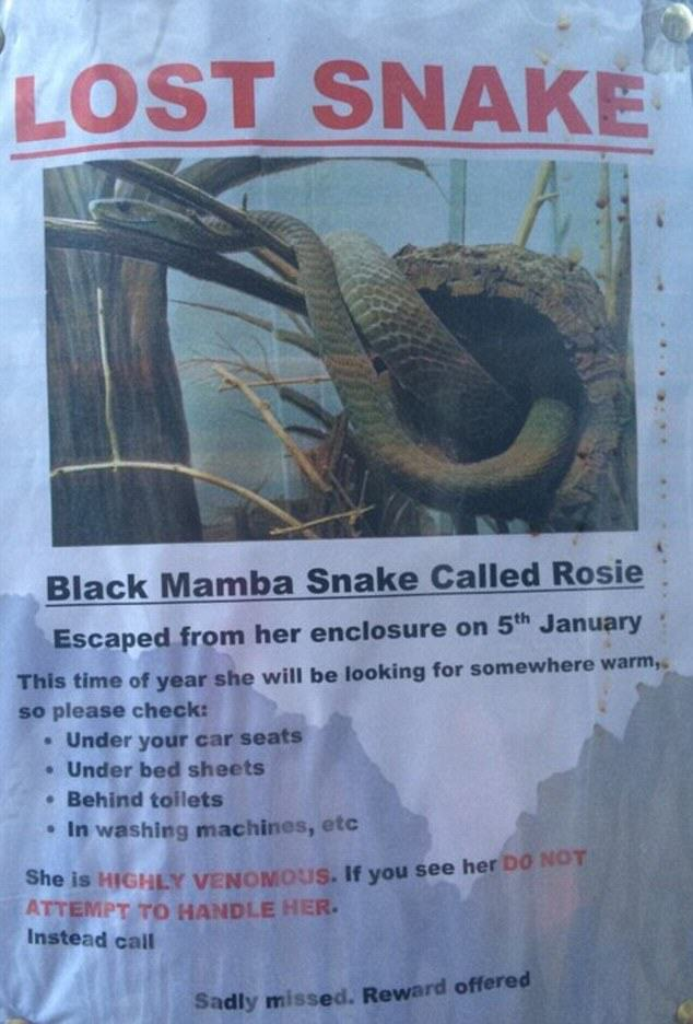 Deadly Black Mamba Snake On The Loose In The UK snake 1