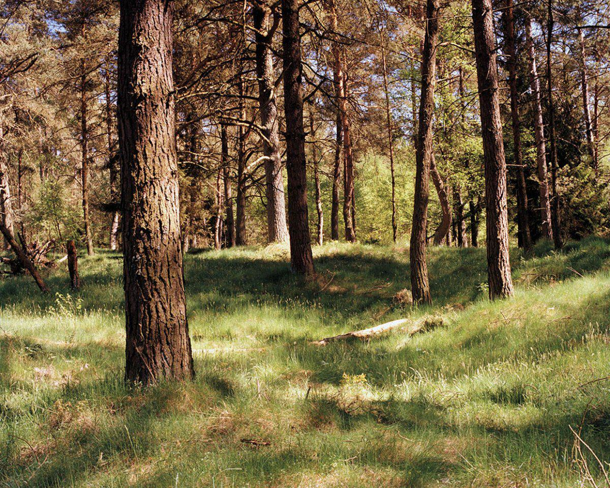 Can You See The Camouflaged German Sniper In These Photographs? sniper2