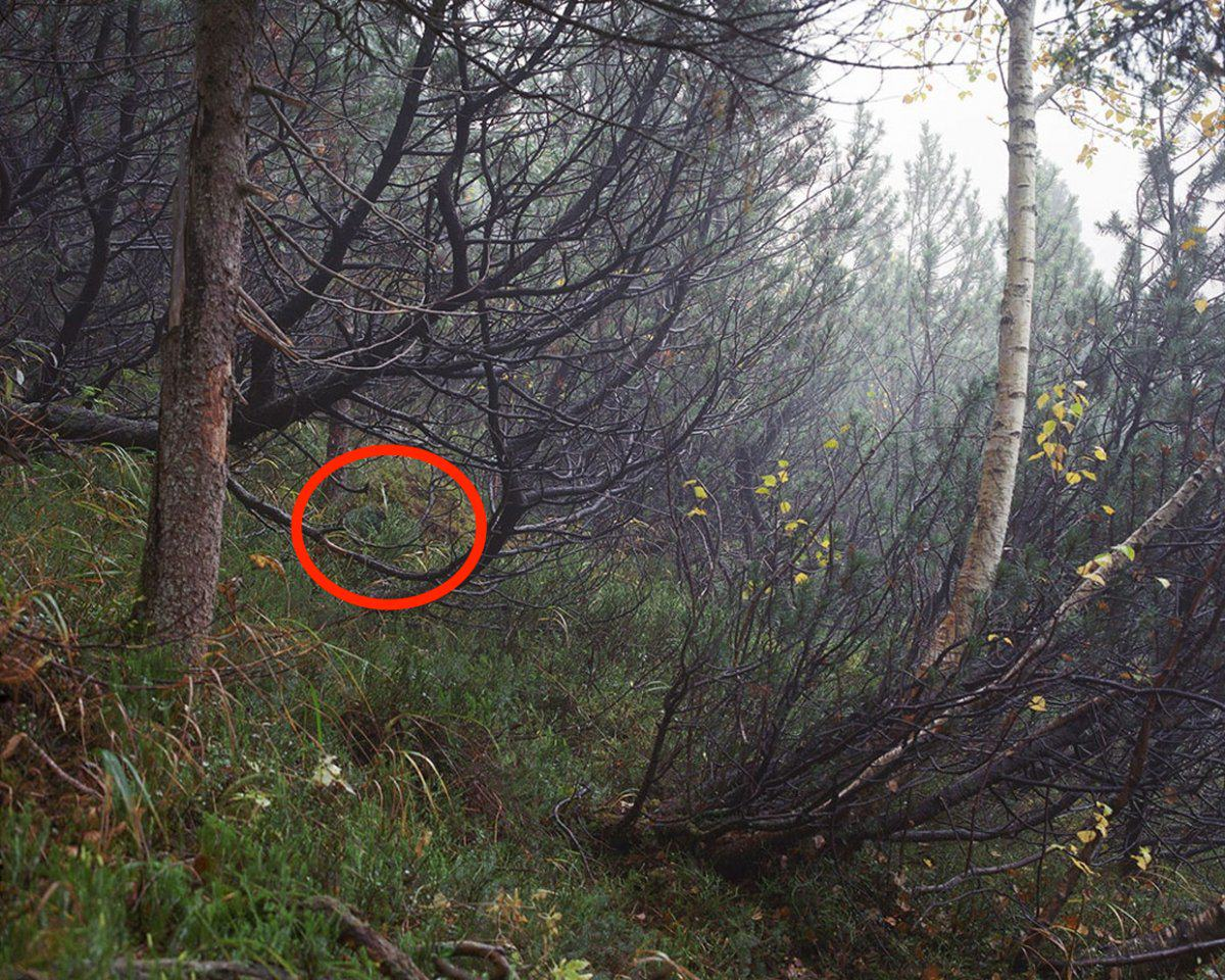 Can You See The Camouflaged German Sniper In These Photographs? sniper4