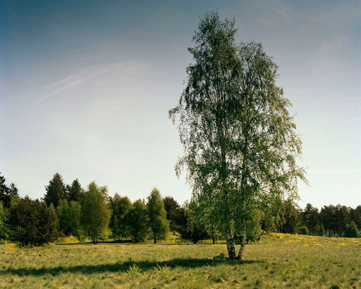 Can You See The Camouflaged German Sniper In These Photographs? sniper6
