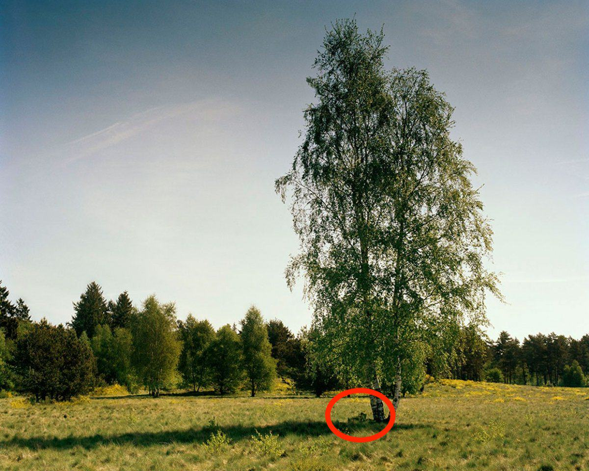Can You See The Camouflaged German Sniper In These Photographs? sniper7