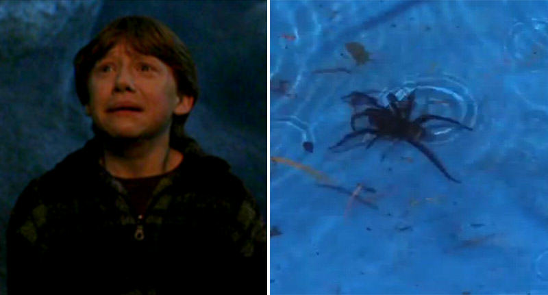Kids Scream For Help As Deadly Spider Found In Paddling Pool spider pool FB