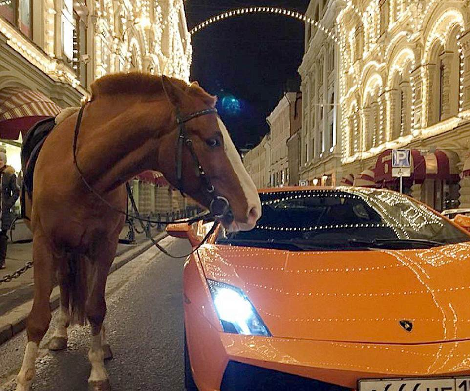 Instagram Account Reveals Ridiculous Lifestyles Of Russias Rich Teens 3173989C00000578 0 This bizarre photograph shows a horse next to a Lamborghini at a a 141 1456161829666 962x800