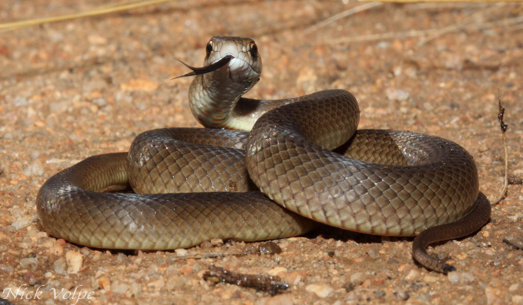 NOPE: Animals In Australia Are Even More Terrifying Than We Realised 7121195685 4846ff005a b
