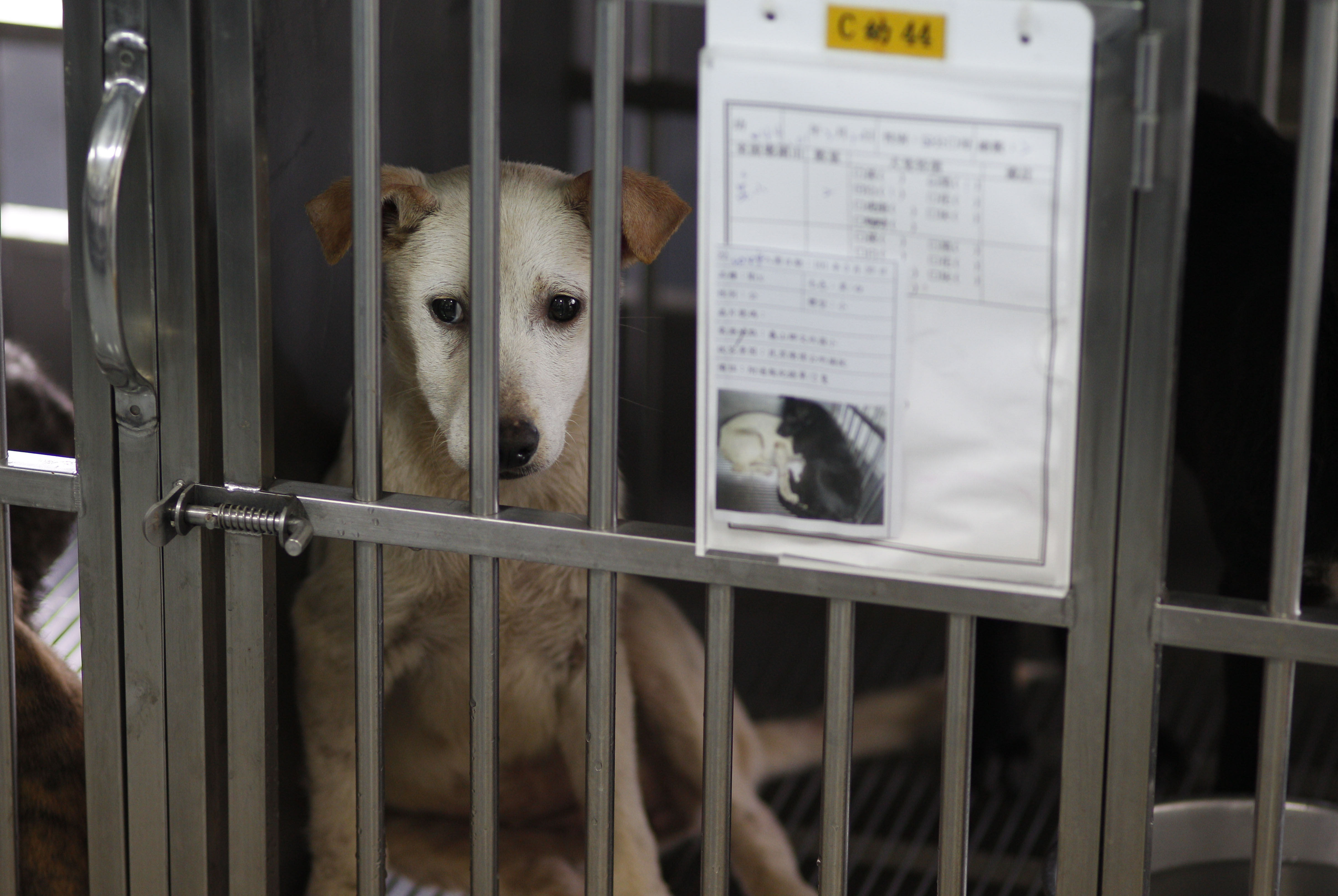 Animal Shelter Euthanising Dogs By Gunshot Was A Mistake Says Citys Mayor PA 13968286