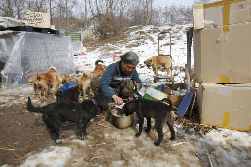 This Woman Is Singlehandedly Raising 200 Dogs She Saved From Meat Farms PA 25415488