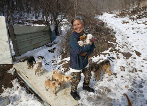 This Woman Is Singlehandedly Raising 200 Dogs She Saved From Meat Farms PA 25415491