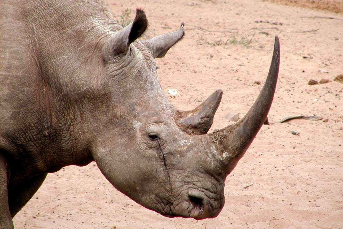 The SAS Are Getting Involved In The War Against Rhino Poachers %name