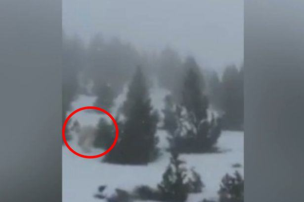 Skiers In Panic Over Bizarre Video Apparently Showing Real Life Yeti Yeti spotted in Spain