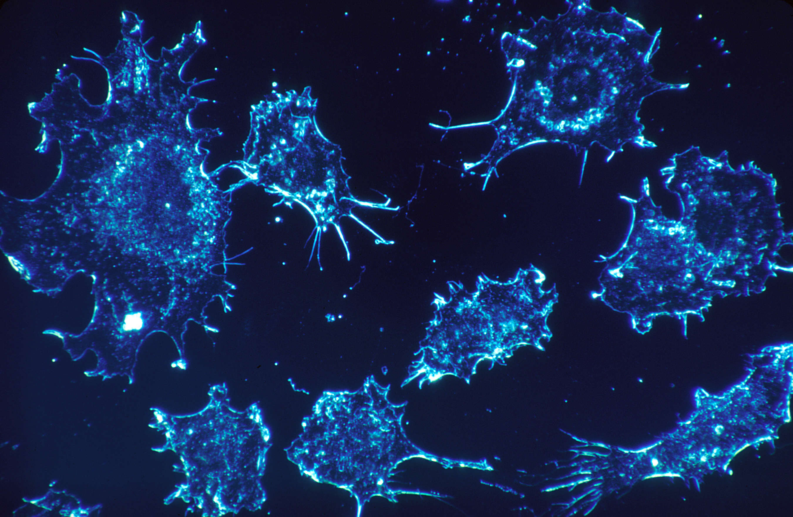 Scientists Unveil Revolutionary Drug That Could Wipe Out Cancer cancer4