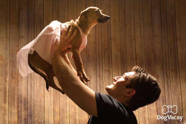 Dogs Recreate Famous Romantic Film Scenes For Valentines Day dogs dirty dancing on valentines day