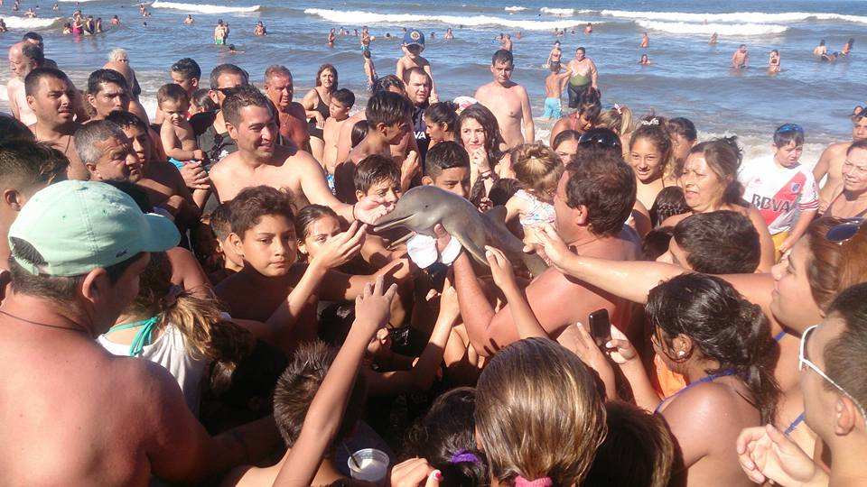 A Baby Dolphin Died Because Tourists Wanted Selfies With It dolphin1