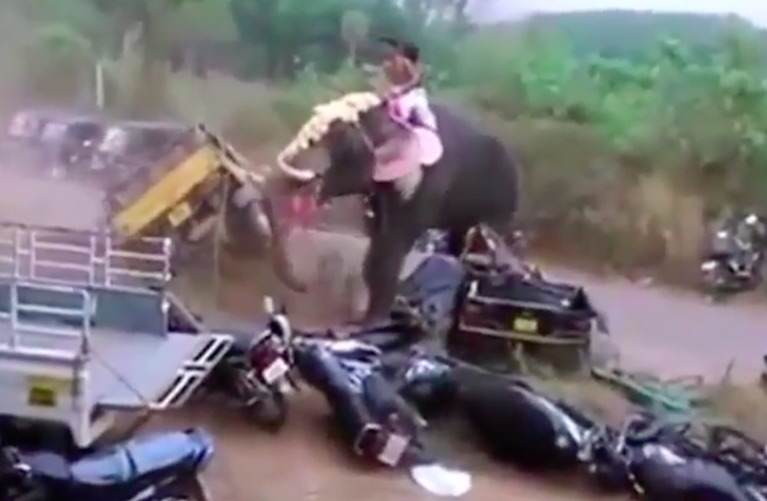 Angry Elephant Smashes Up Vehicles During Raging Rampage elephant1 1