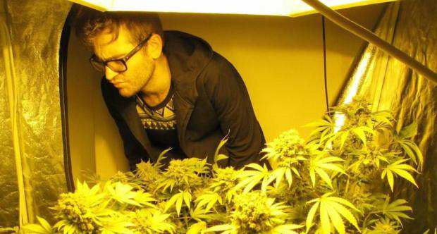 This Guy Was So Sh*t At Growing Weed That He Was Spared Jail growing weed