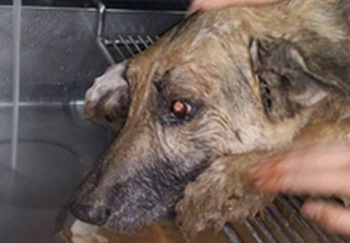 Dog Is Rescued After Being Buried Alive For 72 Hours In Sinkhole pup1 1
