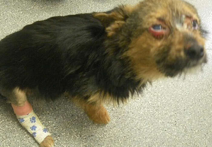 Over 450,000 People Sign Petition Calling For Animal Cruelty Register rspca1 1