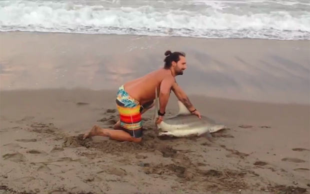 Man Drags Shark From The Sea Just To Pose For Photos shark florida anim 3579904b