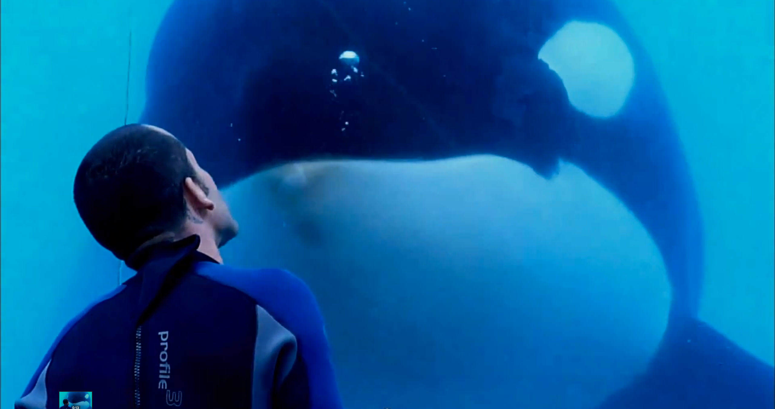 Heres What Will Happen To SeaWorlds Last Generation Of Killer Whales 04 blackfish