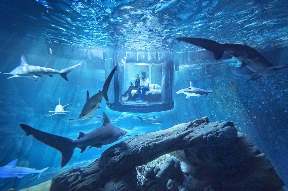 Airbnb Launches First Underwater Bedroom And It Looks F*cking Awesome 32A29F5F00000578 3513560 For three nights in April guests will be able to sleep in a bedr a 8 1459244318048