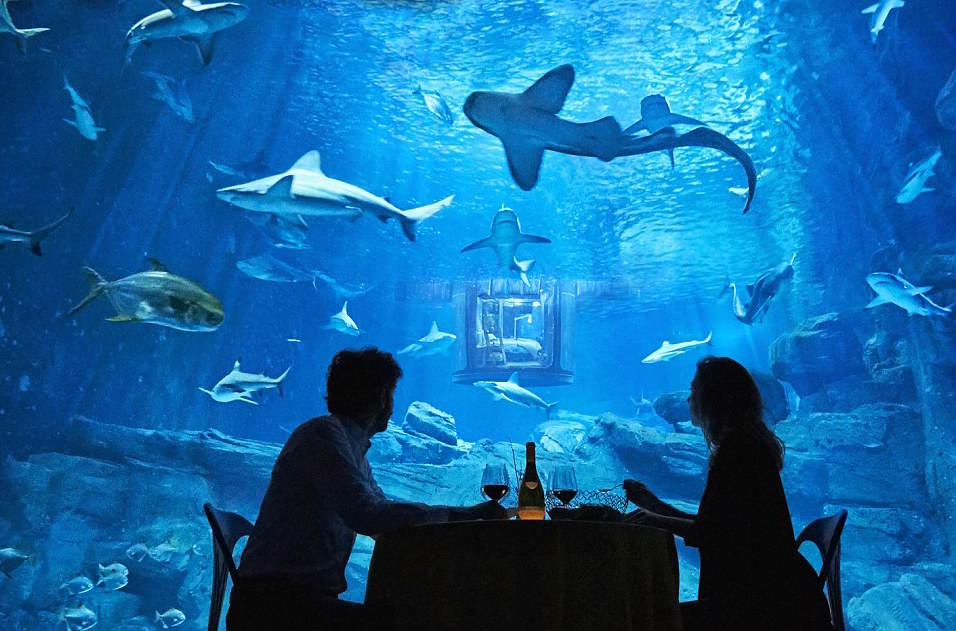 Airbnb Launches First Underwater Bedroom And It Looks F*cking Awesome 32A29F7700000578 3513560 The guests will also enjoy a meal in front of the shark tank a 11 1459244318052