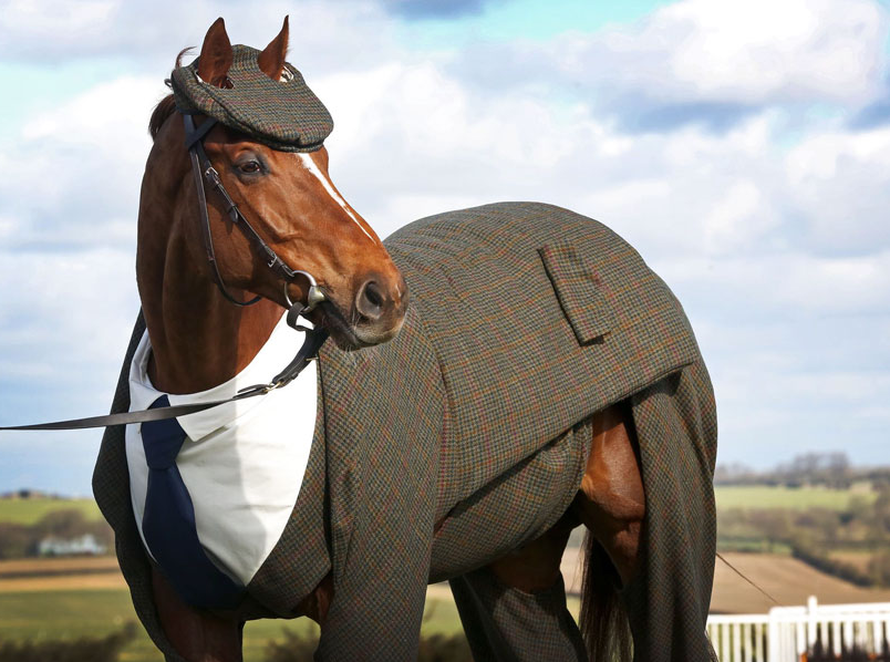 Horse Gets Tailored Suit, Looks More Dapper Than You Screen Shot 2016 03 15 at 17.45.47 1