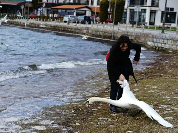 Woman Kills Swan By Dragging It From Lake For Selfie aja