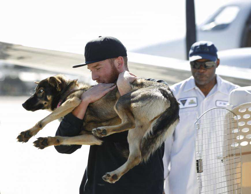 Incredible Story Of Dog That Survived After Five Weeks Being Lost At Sea f dog a 20160319 870x673