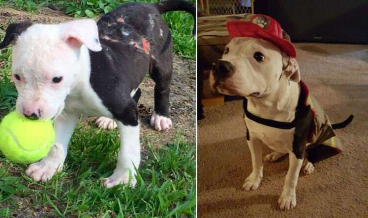 Puppy Rescued From Fire Grows Up To Become A Firefighter jake