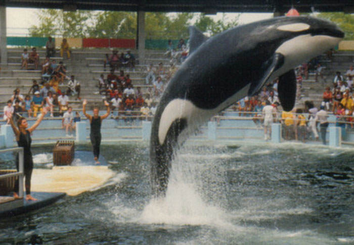 Worlds Loneliest Orca Lolita To Remain At Seaquarium In Tiny Tank lolita1