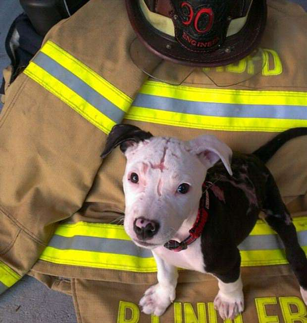 Puppy Rescued From Fire Grows Up To Become A Firefighter puppy