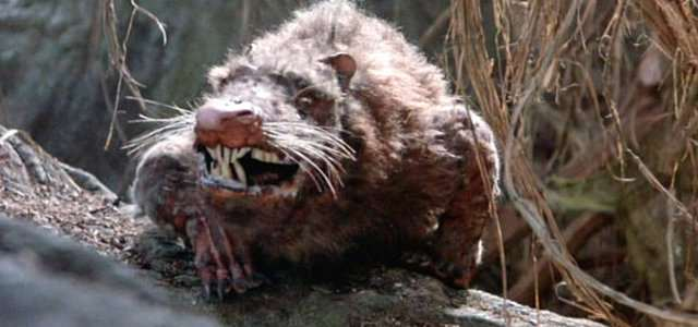 It Turns Out Giant Rats Actually Are A Thing And Theyre Invading rat3