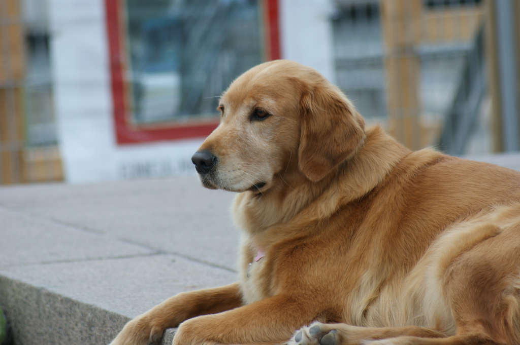 Girl Walks In On Dads Colleague Doing Something Very, Very Wrong With Her Dog retriever1