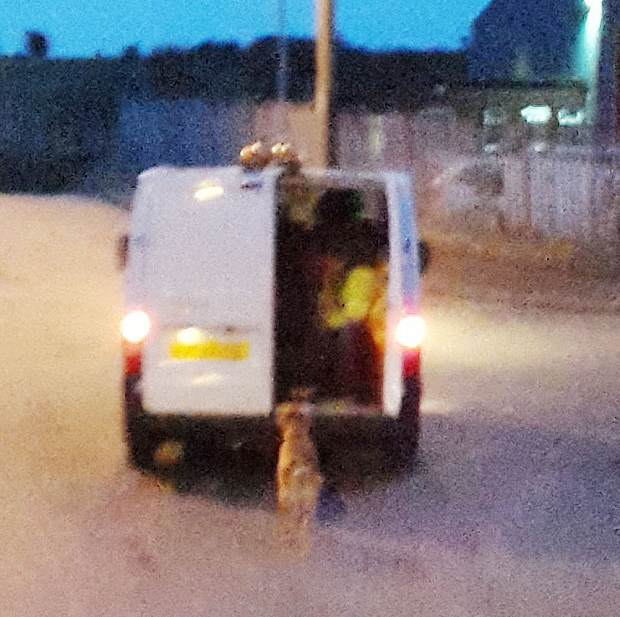 Do You Know These Absolute Bastards Who Dragged A Dog Behind A Van? rspca2
