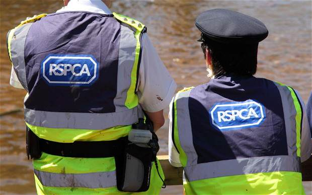 RSPCA officers
