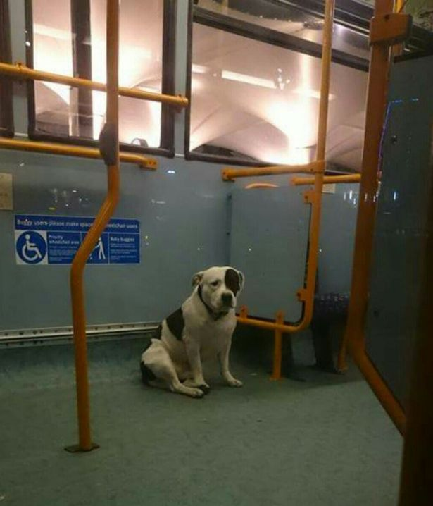 Can You Help Reunite This Dog Left On Bus With Owner Abandoned dog 1
