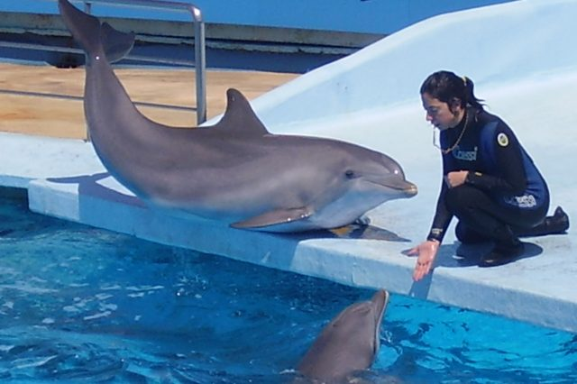People Outraged At Plans To Ship Dolphins To Desert Wildlife Park Dolphin and trainer 4 640x426